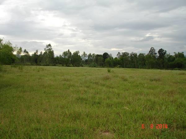 ขายที่ดินสำหรับ ทำการเกษตรหลังเกษียณ มีโฉนดพร้อมบ้านพักและสระน้ำ 21 ไร่ 3 งาน 80 ตารางวา